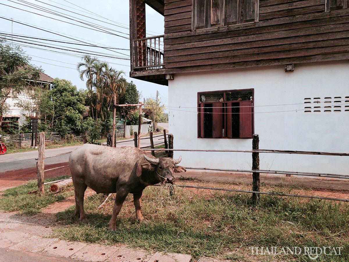 Ban Chiang Village