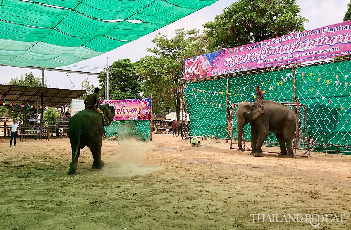 Ban Taklang Elephant Village