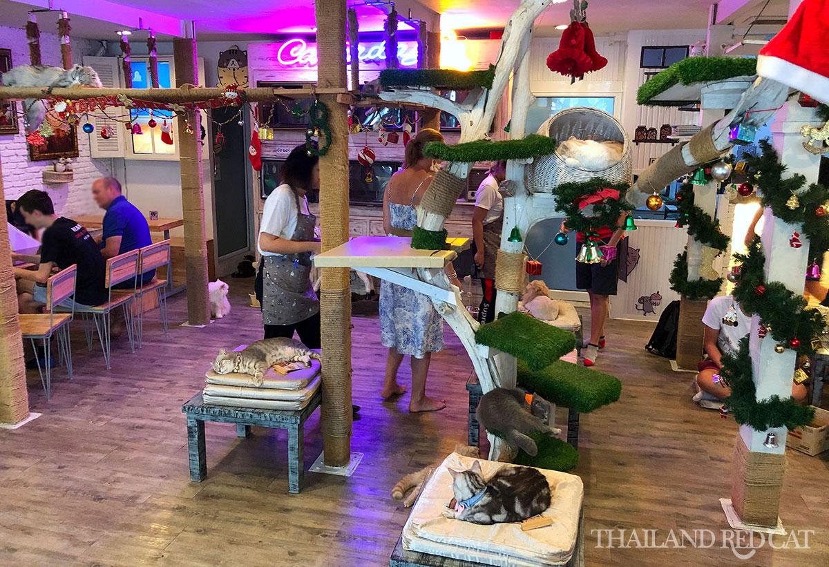 Bangkok Cat Cafe