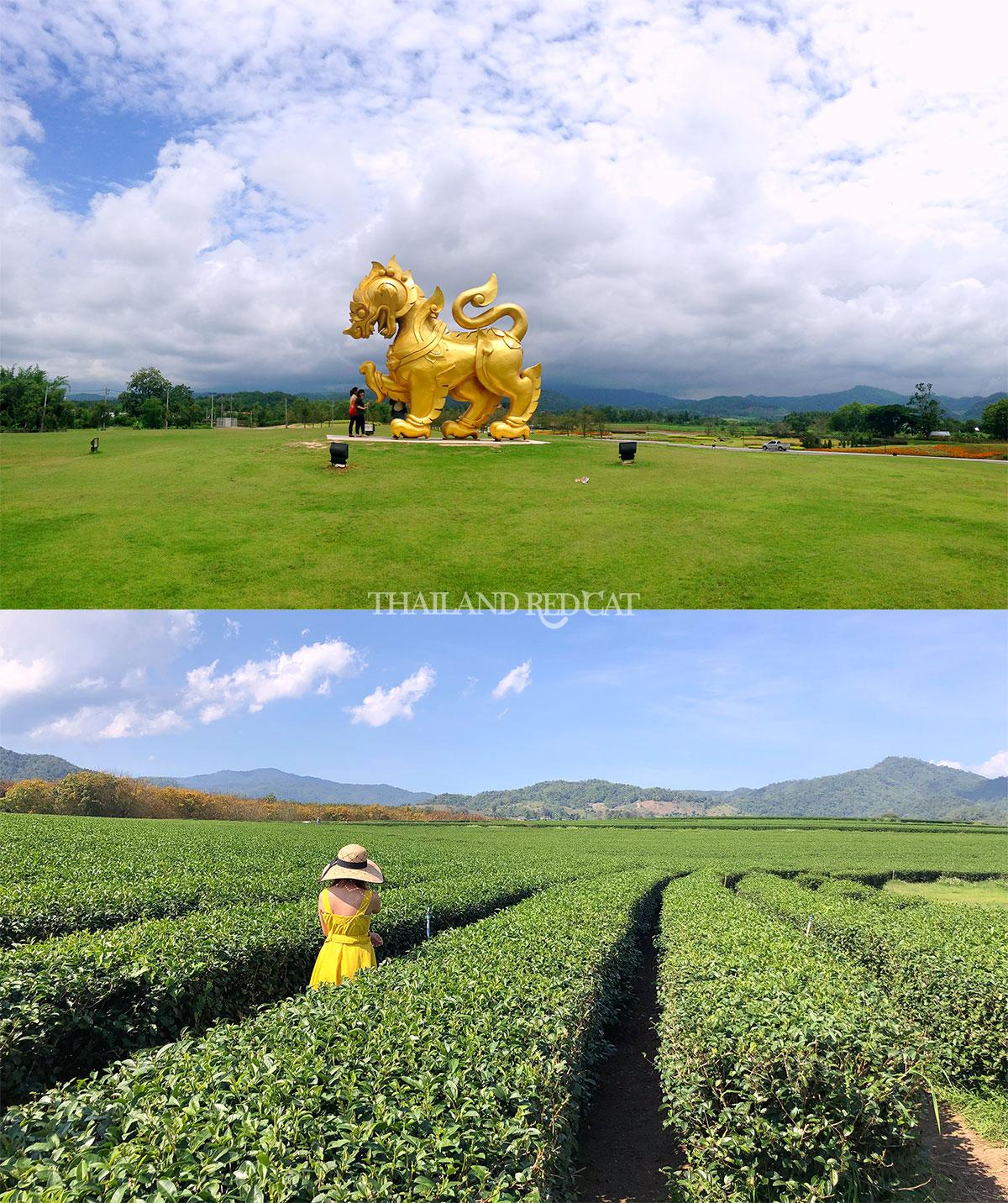 Chiang Rai Singha Park