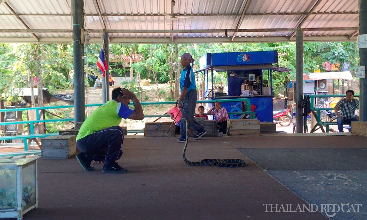 King Cobra Village in Khon Kaen