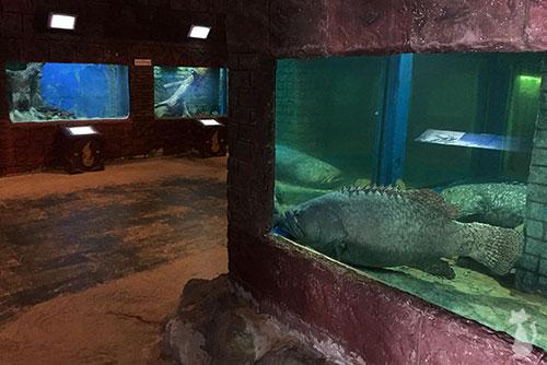 Nong Khai Aquarium 2